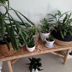 Kuvan mahdollinen sisältö: kasvi Plants, Art, Instagram, Design, Art Background, Kunst, Plant, Performing Arts