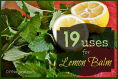 Lemon Balm is a great smelling and tasty herb that has so many uses it can be hard to know where to start! Let's start with these 19 wonderful uses.
