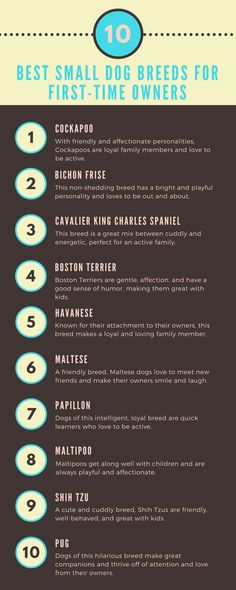 What are the Best Small Dog Breeds for First-Time Owners? | Thinking of adding a new furry friend to your family but not sure how to pick? We've got you covered. Click through to learn about the top 10 small dog breeds for new dog owners.
