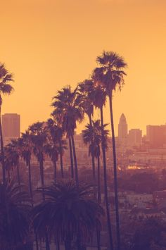 In the land of splashy pool parties and Hollywood movie studios, swag reigns supreme — but you don't have to be red carpet royalty to get things for free. Here, some tips and tricks for seeing LA's must-see spots – and maybe the stars — for a bargain.#Jetsetter