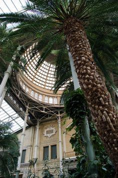 Ny Carlsberg Glyptotek winter garden - A beautiful wedding venue in Copenhagen