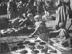 بائع الجراد - الصويرة - المغرب