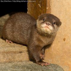 Funny Otter!