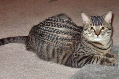 This cat can rock some braids.  This might be the craziest thing I've ever seen.