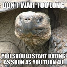 """Tortoise: """"Don't wait too long. You should start dating as soon as you turn 40."""" Thanks, Mr. Tortoise."""