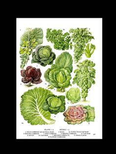 Cabbage Kale Savoy Brussel Sprouts Salad от SurrenderDorothy