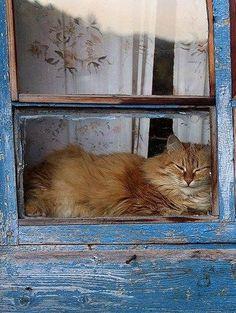 Contented window cat.