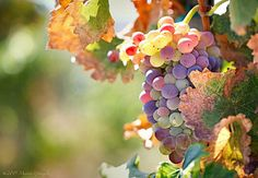 Temecula Valley Wine Country 8.15.15 8