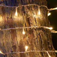 Home Decor: Home Decor – ROBBIE 100 Fairy Lights (Indoor/Outdoor) – Dotty Home Gifts & Interiors
