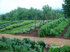 Image Result For Vegetable Gardening In South Dakota