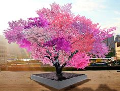 In a magical marriage of art and sustenance, Sam Van Aken has created a fairytale tree that blooms in multiple colors and produces 40 different kinds of fruit.