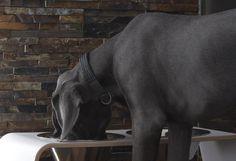 hundeleine aus leder zum umh ngen ohne hundehalsband benutzbar hunde zubeh r wissenswertes. Black Bedroom Furniture Sets. Home Design Ideas
