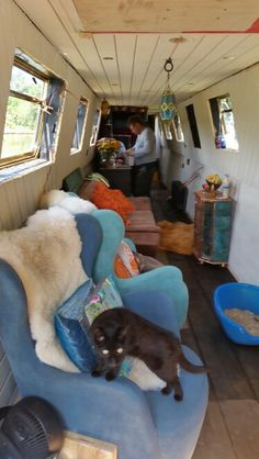 All 3 cats on board NB Recalcitrant. June 2015
