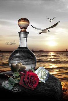 By Artist SBudak. Gothic Wallpaper, Rose Wallpaper, Cute Wallpaper Backgrounds, Pretty Wallpapers, Beautiful Love Images, Beautiful Roses, Book Cover Background, Splash Images, Emoji Love