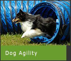 Dog Agility Products