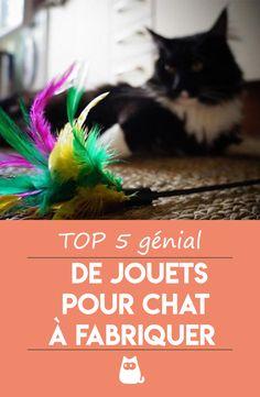 Diy Jouet Pour Chat, Cat Health, Jouer, Cat Life, Happy Life, Dog Cat, Pets, Top 5, Coin