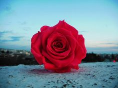 ❤ Lovely Red Rose ❤ The Colour Of Passion ❤  #redroses #redcolor #infinityroses #preservedroses #foreverroses #lastsforever #roseslover #roses #flowershots #flower #flowerlovers #inspiration #passionrose #passion #fantasy #nofilters #sky #perfectblue #bluesky #cityview #view #floristshop #thessaloniki #greece #anthos_theartofflowers Red Color, Colour, Forever Rose, Preserved Roses, Thessaloniki, Flower Art, Red Roses, Greece, Passion
