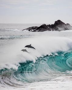 """Dolphins """"surfing"""""""