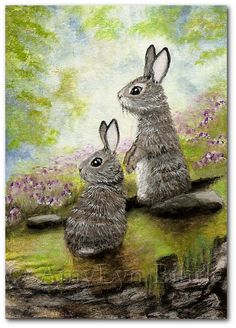 Wildlife Wonders 21  Cottontail Rabbits  Fine ArT by AmyLynBihrle, $8.99