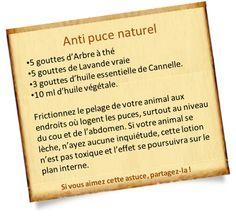 anti puce naturel aux huiles essentielles