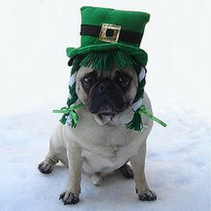 st patrick's day dog costumes - Google Search