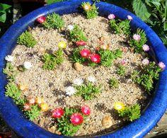 Delosperma cooperi 'Jewel of Desert' Hardy ice plant Ice Plant, Acai Bowl, Deserts, Jewels, Garden, Plants, Food, Acai Berry Bowl, Desserts