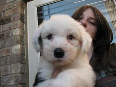 old english sheepdogs - Google Search