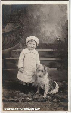Wire Fox Terrier, c.1910