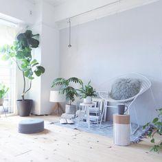 『ウンベラータのある部屋』窓際に大きな観葉植物があると部屋に清涼感がでますね。9万枚以上の観葉植物の部屋実例を参考にしてみてください . Photo:ak3(RoomNo.594452) ▶︎この部屋のインテリアはRoomClipのアプリからご覧いただけます。アプリはプロフィール欄から . 投稿イベント開催中です【まもなく終了する投稿イベント】『洗濯機、これ使ってます!〜8/28』『カーインテリア〜8/28』 . #RoomClip#interior#architecture#interiordesign#decoration#styling#myhome#livingroom#homedesign#interiordecor#homestyling#lifestyle#インテリア#ハンドメイド#日常#家#くらし#部屋#新居#リノベーション#マンション#内装#住まい#フローリング#リビング#グリーン#植物のある部屋#ウンベラータ#観葉植物