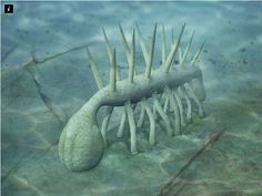 Geology in the West Country: Strange creatures in the Cambrian Burgess Shale