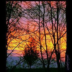 Branchy Sunset. Copyright Melody Bills-Hubbard. For purchase www.instacanv.as/lodyangel. Follow me on instagram @Melody Dawn.