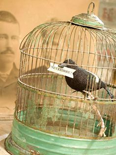 Awesome Spooky Indoor Halloween Decoration Design Ideas: Frightening Scary Poems By Edgar Allan Poe Halloween Decorations Ideas With Old Photo And Black Crow Inside Antique Birdcage Bleak Message ~ wegli Holidays Halloween, Halloween Crafts, Halloween Ideas, Haunted Halloween, Halloween Party, Halloween Stuff, Halloween Raven, Pretty Halloween, Halloween Images