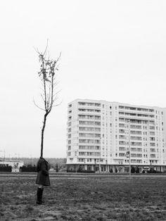 Tree People (2)