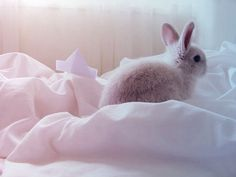 Cutest bunny in the world