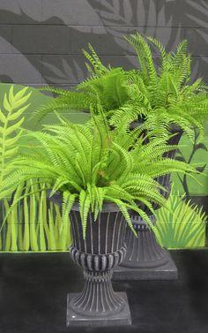 Ferns in Black urns