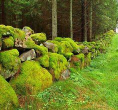 beautiful rock wall