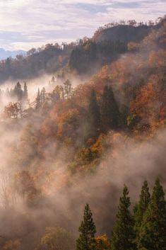 Misty & foggy