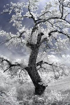 How Infrared Photography Can Turn Your Ordinary Images into infrared photography subjects - Photography Subjects Types Of Photography, Fine Art Photography, Landscape Photography, Photography Lessons, Tree Images, Nature Images, Infrared Photography, Amazing Nature, Mother Nature
