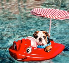 CRUISING ALONG … RIGHT into SUMMER!! HAPPY MEMORIAL DAY!!