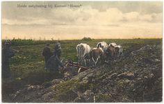 Heeze, Het ontginnen van de hei, vijf runderen trekken de ploeg Paal-van Kessel, G. van de (uitgever) 1890