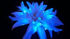 Large White Spider Crysanthemum LED Flower Hair by LittleLightLab