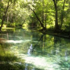 Ginnie Springs FL
