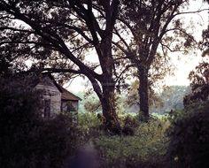 """peek through the woods"" (Arnaudville, Louisiana) © Brienne Joubert Photography"