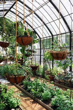 Get inspired ideas for your greenhouse. Build a cold-frame greenhouse. A cold-frame greenhouse is small but effective. Large Greenhouse, Outdoor Greenhouse, Cheap Greenhouse, Greenhouse Interiors, Backyard Greenhouse, Greenhouse Plans, Pallet Greenhouse, Greenhouse Wedding, Portable Greenhouse