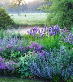 ENGLISH GARDEN, Clive Nichols, photographer. I am obsessed by blue borders and this is just gorgeous with a perfect balance of texture, rhythm and hue. The ram rod blue irises are counteracted by the looseness of the nepeta, geraniums and alchemilla mollis, the latter of which adds a kick of lime. This atmospheric image is from the book entitled English Garden by legendary garden photographer Clive Nichols @clivenichols via @theenglishgardenmagazine #gardenphotography #clivenichols…