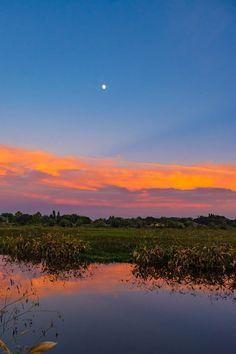 Moonrise over the Celery Fields