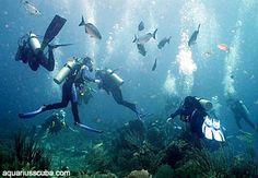 Diving in Honduras, Roatan Honduras Roatan, Scuba Diving, Aquarium, Diving, Goldfish Bowl, Aquarium Fish Tank, Aquarius, Fish Tank