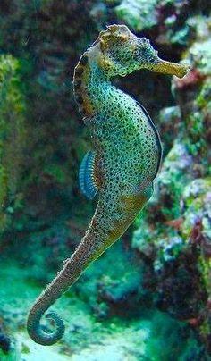 Beautiful Sea Creatures, Deep Sea Creatures, Cute Creatures, Animals Beautiful, Cute Animals, Underwater Creatures, Underwater World, Monster Fishing, Undersea World