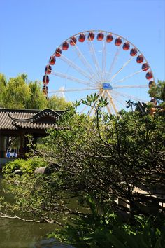 Ferris Wheel and beautiful Chinese Garden of Friendship – moments of Asia - Sydney, New South Wales, Australia