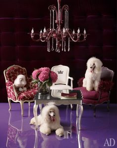 """Excellent """"French poodles"""" detail is offered on our site. Read more and you will not be sorry you did. French Poodles, Millionaire Lifestyle, Animal Fashion, Dream Life, House Styles, Luxury, Inspiration, Divas, Walls"""